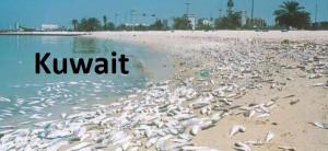C 40 a Dead fish Kuwait