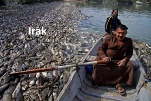 C 43 a Fishkill2 Irak