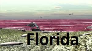 C 49 n Florida