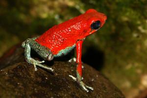 granularpoisonfrog